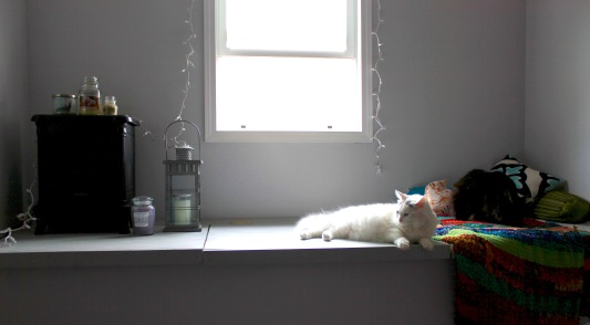 Cat lounge.